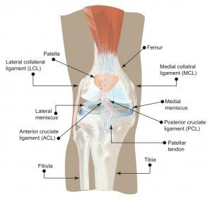 Understanding_your_knee